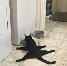 「友達の猫は…食べ方がどうもおかしい」なぜ?と疑問になる写真