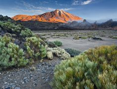 Pico del Teide, Tenerife, Canary Islands, Spain --- Rainer Mirau, Photography. Front probably Ginestra