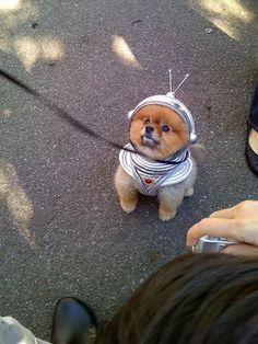 Puppy costume.....awwww!