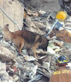 Topper, a search and rescue dog who began his career at the site of the Oklahoma City bombing on April 19, 1995, being the first FEMA dog deployed to the rubble of the Murrah Building.