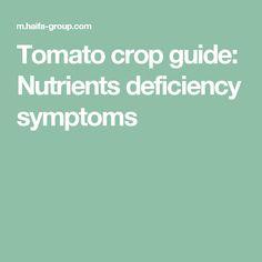 Tomato crop guide: Nutrients deficiency symptoms