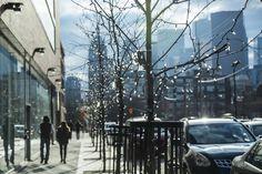 Toronto #canada #toronto #citylights #metropolis #lights #tree
