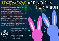 fireworks are no fun for a bun - RWAF House Rabbit, Bunny Rabbit, Rabbit Hole, Rabbit Habitat, Fireworks, Fur Babies, Helpful Hints, Stress, How To Plan