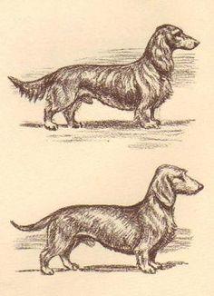 Dachshund 2 Vintage Dog Print 1954 Megargee | eBay