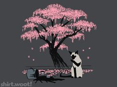 siamese cat cherry blossom footprints