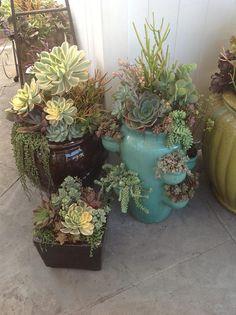 Beautiful arrangements of cactus Succulent Landscaping, Succulent Gardening, Succulent Terrarium, Container Gardening, Garden Plants, Succulents In Containers, Cacti And Succulents, Planting Succulents, Outdoor Plants