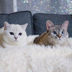 via nala_cat @ nala_cat Family photo⛄️❄️ Nala_cat with white_coffee_cat