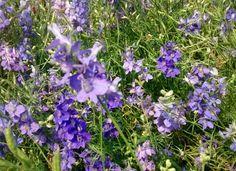 Purplely
