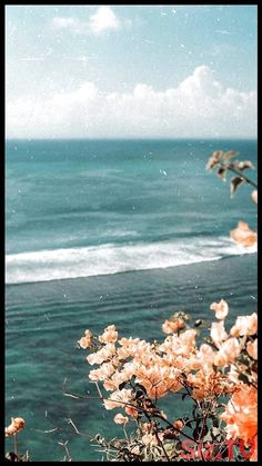 Bougainvillea at the ocean- flowers Collage Des Photos, Photo Wall Collage, Picture Wall, Aesthetic Pastel Wallpaper, Aesthetic Backgrounds, Aesthetic Wallpapers, Iphone Background Wallpaper, Nature Wallpaper, Homescreen Wallpaper
