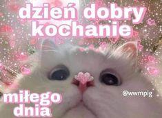 Cute Sentences, Sweet Memes, Polish Memes, Cute Love Memes, Crush Memes, Cute Texts, Sweet Pic, Cute Cats And Dogs, Wholesome Memes