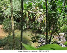 Beautiful Tropical Rainforest Landscape Middle South Stock Photo (Edit Now) 403099906 Glass Frog, South America, Plant Leaves, Photo Editing, Waterfall, Royalty Free Stock Photos, Middle, Tropical, Landscape