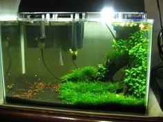 Low Tech Tank Show-and-Tell (low tech can be lush, too! =)