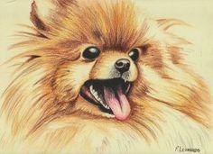 Cachorros <3 - Leonardo Ferreira