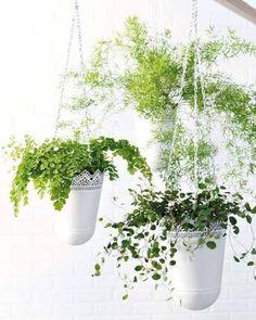 plantas esbeltas de sombra - Buscar con Google