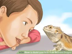 How to Build Love With Your Bearded Dragon. When you own a bearded dragon, it is natural to want to love your pet. Your dragon also can have affection for you if you take care of him. Learn how to hold him appropriately, bathe, and house. Bearded Dragon Funny, Bearded Dragon Cage, Bearded Dragon Habitat, Pet Dragon, Baby Dragon, Lizard Dragon, Terrariums Diy, Reptile Terrarium, Bearded Dragon Enclosure