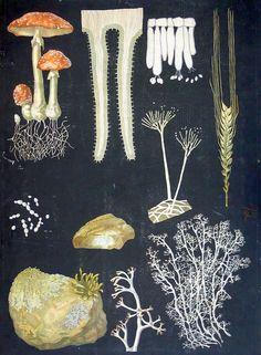 Kärpässieni - Ebba Masalin Otavan kirjapaino 1912 Illustrations, Illustration Art, Typography Prints, Botanical Prints, Printable Wall Art, Jewelry Art, Design Art, Art Pieces, Paper Crafts