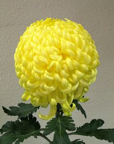 Garden Flowers Chrysanthemum, Brookside Gardens Photograph By Roy Kelley Using A Canon Powershot Camera. Roy And Dolores Kelley Photographs Flora Flowers, Beautiful Rose Flowers, Yellow Flowers, Blossom Garden, Blossom Flower, Flower Games, White Chrysanthemum, Corporate Flowers, Indoor Water Garden