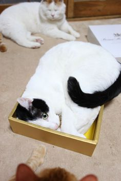 Any size box will do.