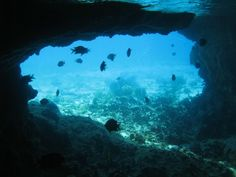 10 Fun Things to Do on Staniel Cay/Exumas ...#6.  Snorkel the Thunderball Grotto (Where the 007 movie Thunderball was filmed)
