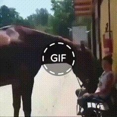 The girl did not expect such behavior from the horse