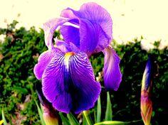 Alpuente 2015 04: primavera en Alpuente