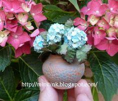 Miniature Blue Hydrangeas