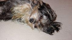Hunde Foto: Silke und Sunny - Game over Hier Dein Bild hochladen: http://ichliebehunde.com/hund-des-tages  #hund #hunde #hundebild #hundebilder #dog #dogs #dogfun  #dogpic #dogpictures