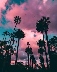 Great 9 Purple Palm Tree Iphone Wallpaper For Your Android or Iphone Wallpapers Tumblr Wallpaper, Trendy Wallpaper, Pretty Wallpapers, Wallpaper Backgrounds, Wallpaper Ideas, Palm Tree Iphone Wallpaper, Sunset Wallpaper, Screen Wallpaper, Pink Clouds Wallpaper