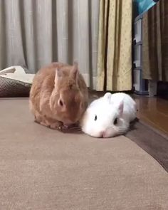 they flop when they are super happy