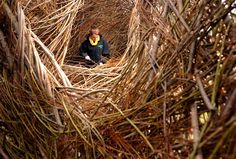 Stickwork by artist Patrick Dougherty - Willow and stick weaving: it's like a giant human nest, adorable!