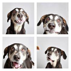 """Reprodução - Em vez de caretas, estes cães são mais propensos a aparecer com expressões como """"adoravelmente distraído"""" e """"confuso"""". E isso desperta a atenção para a ação."""
