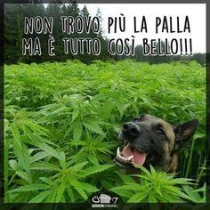 #weed #cane #erba #droga #felicità #palla #sballo #divertente