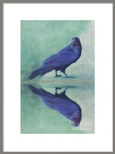 Raven Framed Print featuring the photograph Time To Reflect by Priska Wettstein