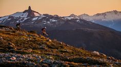 Whistler Blackcomb Ski Resort Pictures: View Photos & Images of Whistler Blackcomb Ski Resort Canadian Rockies, Whistler, Travel Deals, Adventure Awaits, View Photos, Picture Video, Skiing, Travel Photography, Around The Worlds