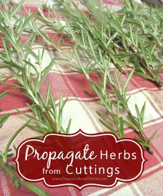 Learn how to propagate herbs from cuttings and get a fantastic herb garden for pennies | PreparednessMama