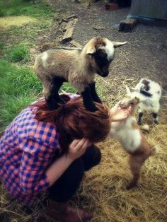 """Baby goats doing what baby goats do. Be adorable"""