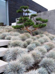 Nice 18 Stunning Grass Garden Ideas for Backyard https://lovelyving.com/2017/09/16/18-stunning-grass-garden-ideas-backyard/