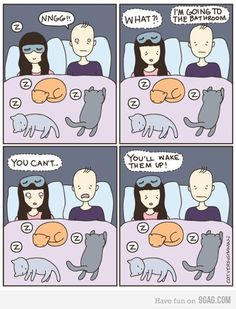 sleeping cats - my life