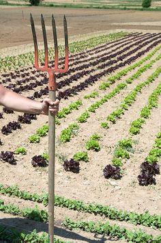 Ten Steps to a Successful Garden - Illinois Vegetable Garden Guide