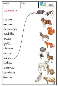 animales minúsculas