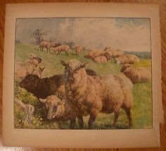 "Beautiful Oil painting warm family sheep together in landscape canvas 24/""x36/"""