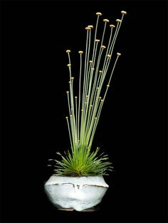 "Kusamono: ""Mikado"" by Horst Heinzelreiter Simplicity made in Germany. He used Syngonanthus chrysanthus as only Plant. Just wonderful!"