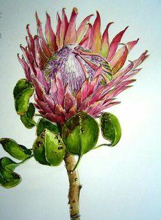 Protea Art, Protea Flower, Plant Illustration, Botanical Illustration, Botanical Prints, Watercolor Artists, Watercolor Flowers, Watercolour Art, Art Floral
