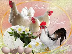Beautiful Images, Rooster, Funeral, Funny Wallpapers For Iphone, Birds, Bunny, Background Images, Moving Pictures, Chicken