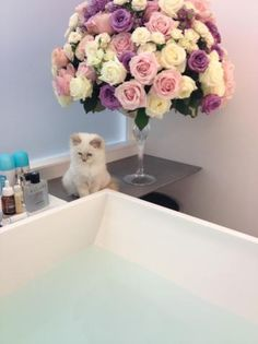 """Karl Lagerfeld shared this photo of his new cat with V Magazine's Stephen Gan, who tweeted it, adding """"... meet Choupette, his new kitten. -SG."""""""
