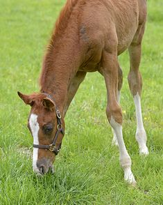 Groupie Doll's First Foal's Homecoming - Through the Lens