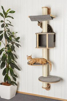 Wall-mounted cat tree Dolomit Tofana, 168 x cm, grey Cat Tower Plans, Dog Crate Furniture, Diy Dog Crate, Diy Cat Tree, Cat Shelves, Shelving, Cat Towers, Cat Playground, Cat Room