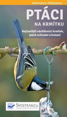 Ptáci na krmítku Bird, Animals, Animales, Animaux, Birds, Animal, Birdwatching, Animais