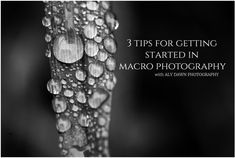 3 Tips for Getting Started in Macro Photography