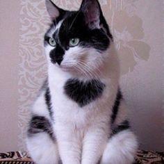 I 'heart' this kitty!!  So beautiful!  <3<3<3